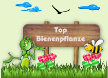 Top Bienenpflanze!