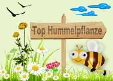 Top Hummelpflanze!