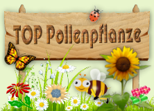 Top Pollenpflanze!